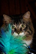 Frisky Photo Posters - Blue Boa Poster by Susan Herber
