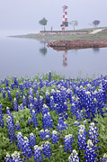 Blue Bonnets Photos - Blue Bonnets on a Beach with Lighthouse by Jeremy Woodhouse