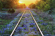 Overgrown Prints - Blue Bonnets on Railroad Tracks Print by Jeremy Woodhouse