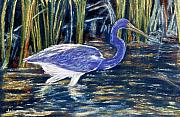 Heron Pastels - Blue Heron by Jan Amiss