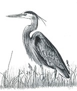 Blue Heron Drawings Prints - Blue Heron Print by Judy Horan