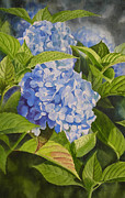 Blue Flowers Paintings - Blue Hydrangea by Sharon Freeman