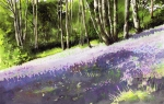 Bluebell Framed Prints - Bluebell wood Framed Print by Paul Dene Marlor