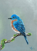 Bluebird Metal Prints - Bluebird Metal Print by Arie Van der Wijst