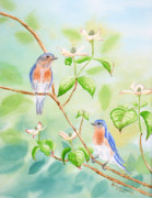 Eastern Bluebird Prints - Bluebirds In Dogwood Tree Print by Kathryn Duncan