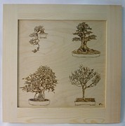 Pine Pyrography Prints - Bonsai Pyrographic Art Original Panel with Frame by Pigatopia Print by Shannon Ivins