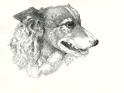 Border Drawings - Border Collie by Joseph Baker