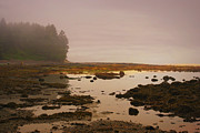 Port Renfrew Prints - Botanical Beach Print by Marilyn Wilson