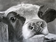 Cow Drawings Framed Prints - Bovine Curiosity Framed Print by Janae Lehto