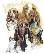 Canine Mixed Media Framed Prints - Bracco Italiano Framed Print by Barbara Keith