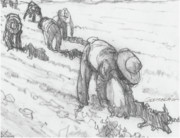 Labor Drawings - Bracero Stoop Labor by Dean Gleisberg