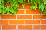 Frame House Photos - Brick wall by Tom Gowanlock