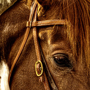 Bridle Art - Bridled by David Patterson