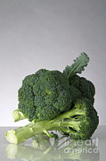 Broccoli Photos - Broccoli by Photo Researchers, Inc.