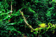 Epiphytic Art - Bromeliads El Yunque National Forest by Thomas R Fletcher