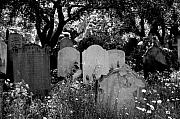 Cemetery Art Photos - Brompton Cemetery London England 2009 by Wayne Higgs
