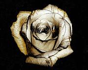 Brown Rose - Digital Painting Print by Merton Allen