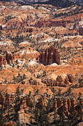 Utah Framed Prints - Bryce Canyon Framed Print by Jane Rix