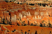 Eleu  Tabares - Bryce Canyon National...