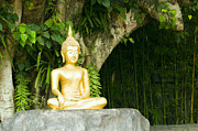 Bodhi Tree Art - Buddha statue under green tree in meditative posture by Ulrich Schade