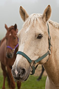 Horse Photography Prints - Buddies Print by Michael Cummings