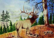 Elk Drawings - Bugling Elk by Jimmy Smith
