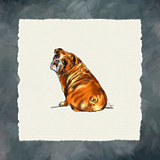 Puppy Digital Art - Bulldog by Jai Johnson