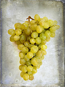 White Grape Posters - Bunch of grapes Poster by Bernard Jaubert