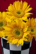 Wooden Prints - Bunch of Sunflowers Print by Garry Gay