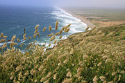 Dawn Richards - Bunny Tails at Point...