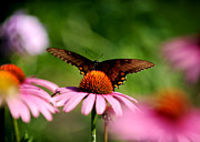 Frank Digiovanni Metal Prints - Butterfly Metal Print by Frank DiGiovanni