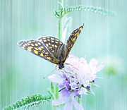 Light Blue Photos - Butterfly by Kristin Kreet