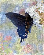 Pipevine Swallowtail Butterfly Prints - Butterfly Love Print by Betty LaRue