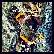 Insect Photos - Butterfly by Natasha Marco
