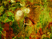 Butterfly Digital Art Posters - Butterfly On Buttonbush Poster by J Larry Walker
