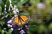 Scripture Photo Posters - Butterfly with Scripture Poster by Linda Phelps