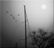 Geese And Moon Prints - By The Pale Moon Print by Brian Wallace