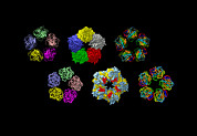 Inflammation Photos - C-reactive Protein, Molecular Models by Dr Tim Evans
