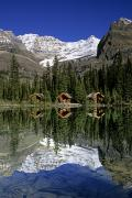 Mountain Cabin Prints - Cabins, Sargents Point, Lake Ohara Print by John Sylvester