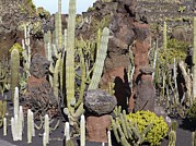 Jardin Photography - Cactus Garden, Lanzarote by Tony Craddock