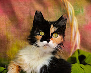 Cat Portrait Photo Framed Prints - Calico Cat in Basket Framed Print by Jai Johnson