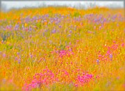 Wild Digital Art Originals - California Wildflowers No. 1 by Gus McCrea