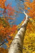 Autumn Scene Photos - Canadian autumn by Mircea Costina Photography