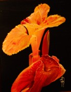 Canna Paintings - Canna by Fred Reid