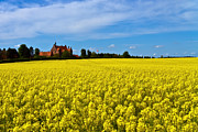 Danish Framed Prints - Canola Castle Framed Print by Gert Lavsen