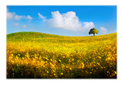 Canola Field Prints - Canola Field With Tree Print by Mal Bray