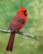 Paintery Prints - Cardinal Print by Kimberly Chason