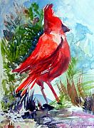 Mindy Newman Drawings Posters - Cardinal Poster by Mindy Newman