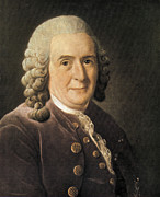 Taxonomist Posters - Carl Linnaeus, Swedish Botanist Poster by Science Source