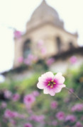 Pink Flower Prints Framed Prints - Carmel Mission with Flowers Framed Print by Kathy Yates